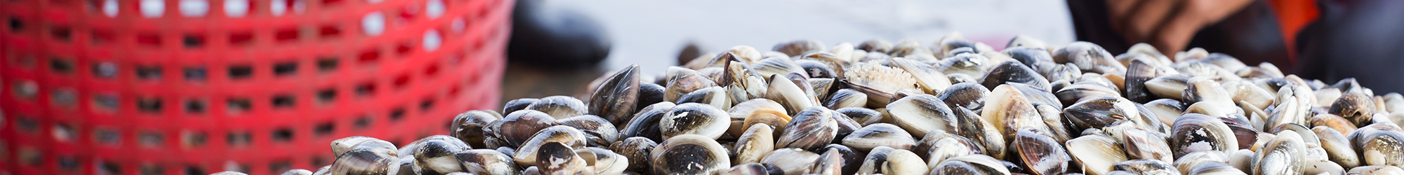 Storico provvedimenti ambiti monitoraggio molluschicoltura Veneto